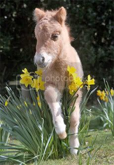 mini pony Pictures, Images and Photos